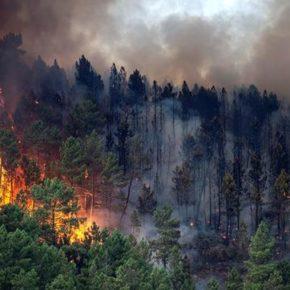 """Javier Nart """"Con los fondos solidarios destinados a Galicia tras los incendios de 2017, la Unión Europea responde mejor que la Xunta"""""""